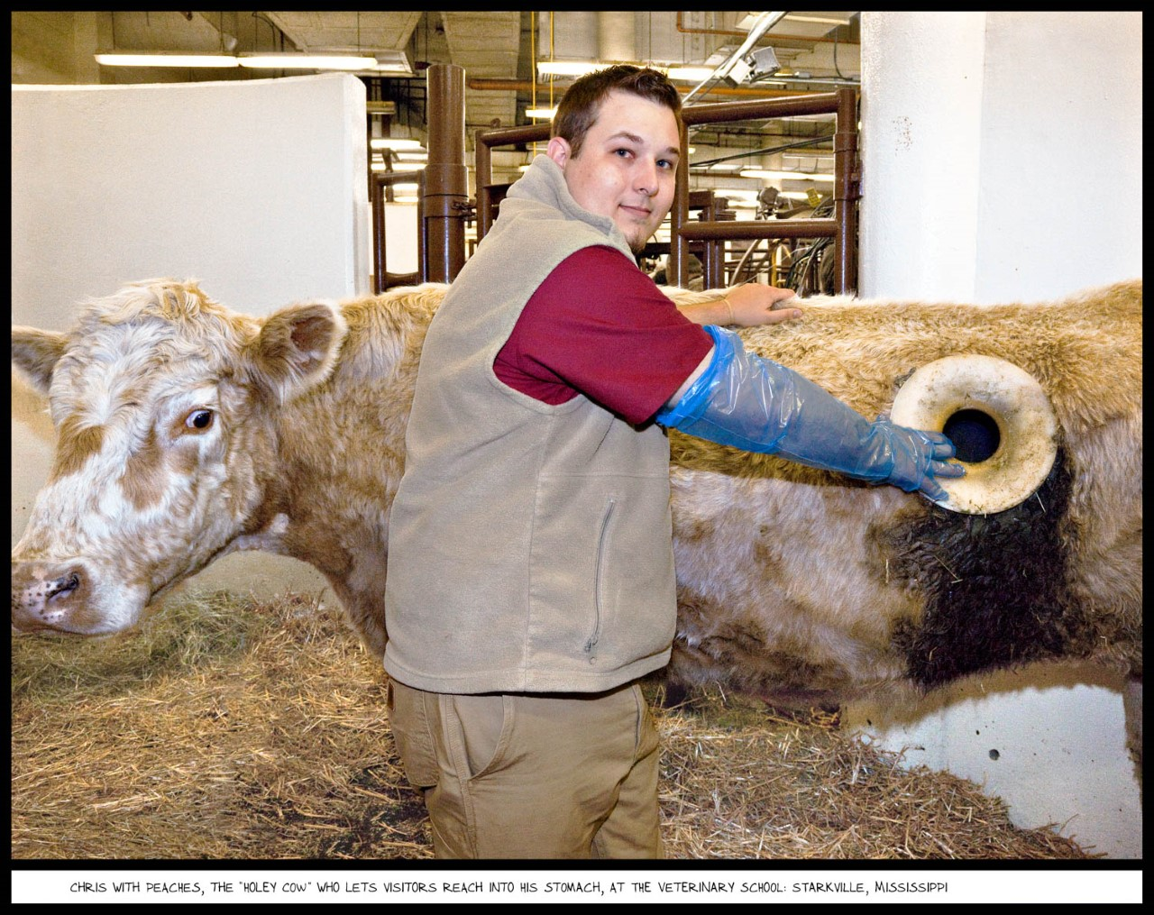 photo of chris with cow named peaches